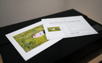 We started sending prints of Chika & Ichio Usui's artwork.